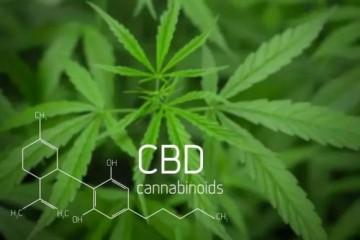 时下新晋热门护肤成分,大麻二酚首当其冲